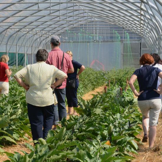 Predstavitve/objave o pridelavi zelenjadnic
